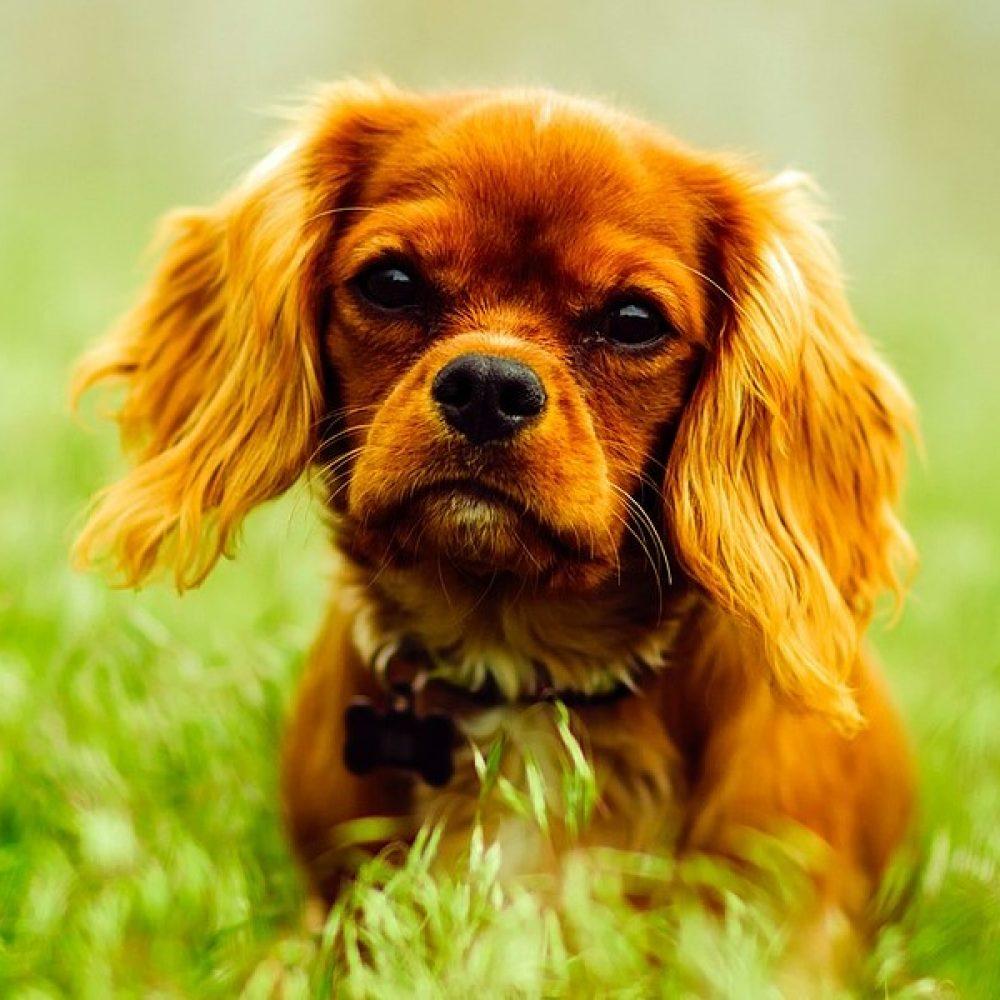 puppy_veld_1920